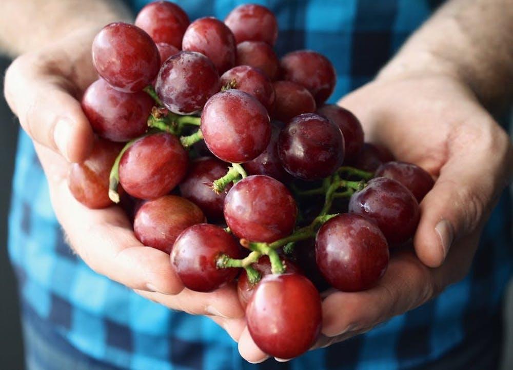 grapeshandsholdingpalmfingers162650