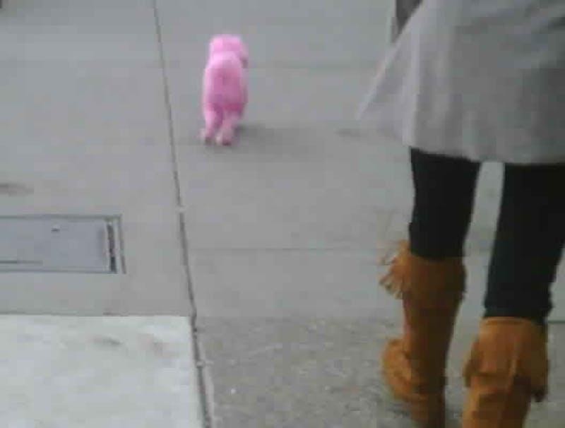 ShutterButton: Pink Poodle?