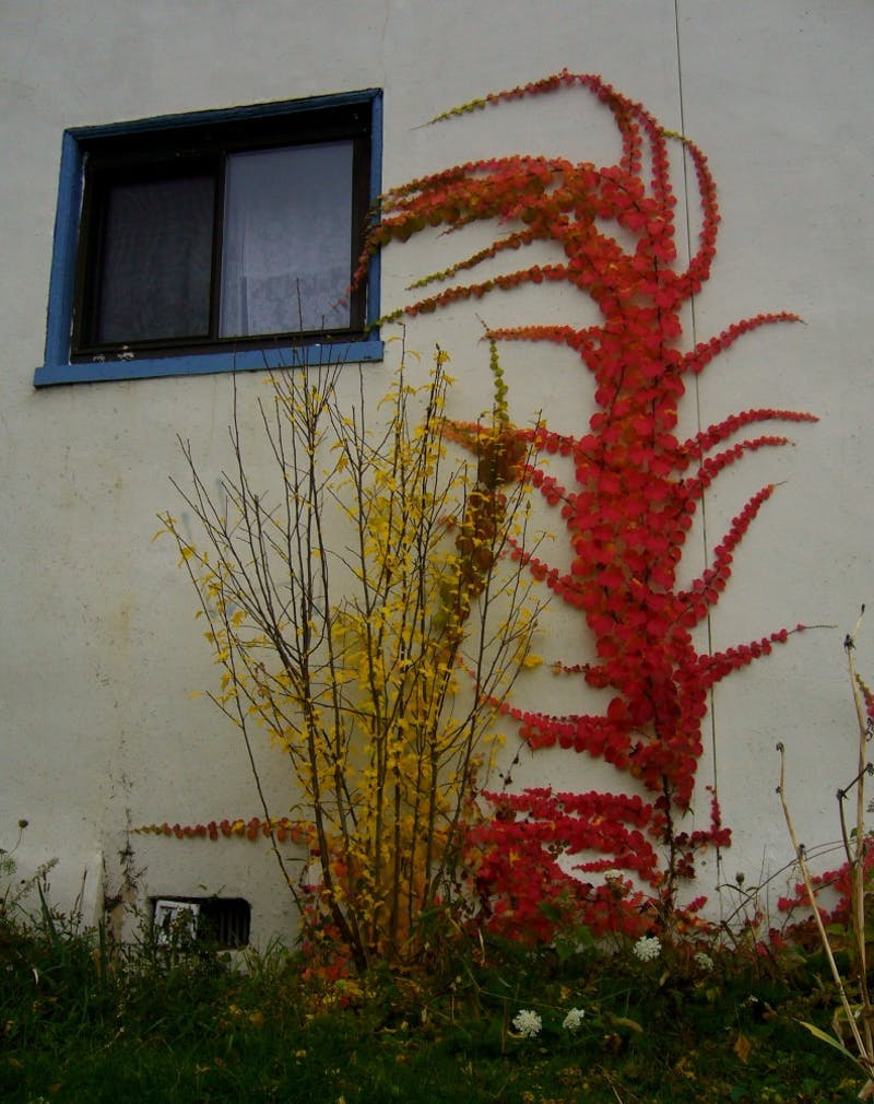 ShutterButton: Global Warming Rampant, Vegetation Allowed to Flourish into November