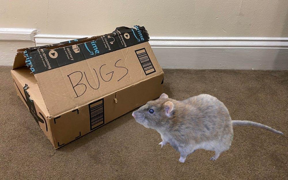 rat-in-box-1