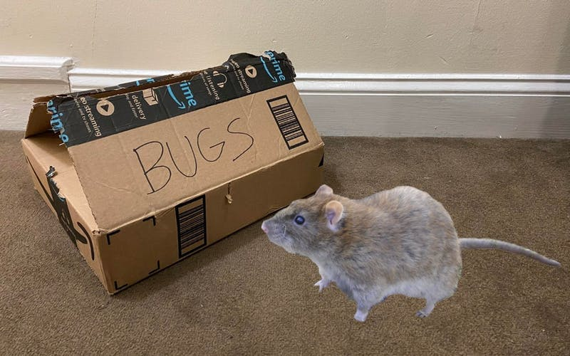 The Results Are In! The Hottest Pets on Campus Are a Loose Rat and a Box of Bugs