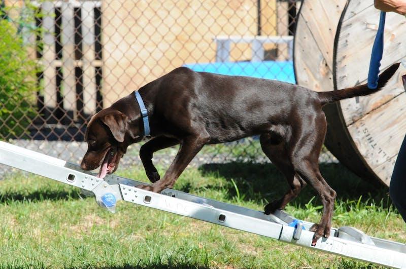 Penn Vet Working Dog Center one-year anniversary