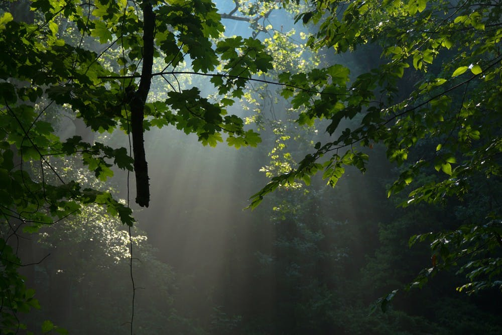 wissahickon-sun-light