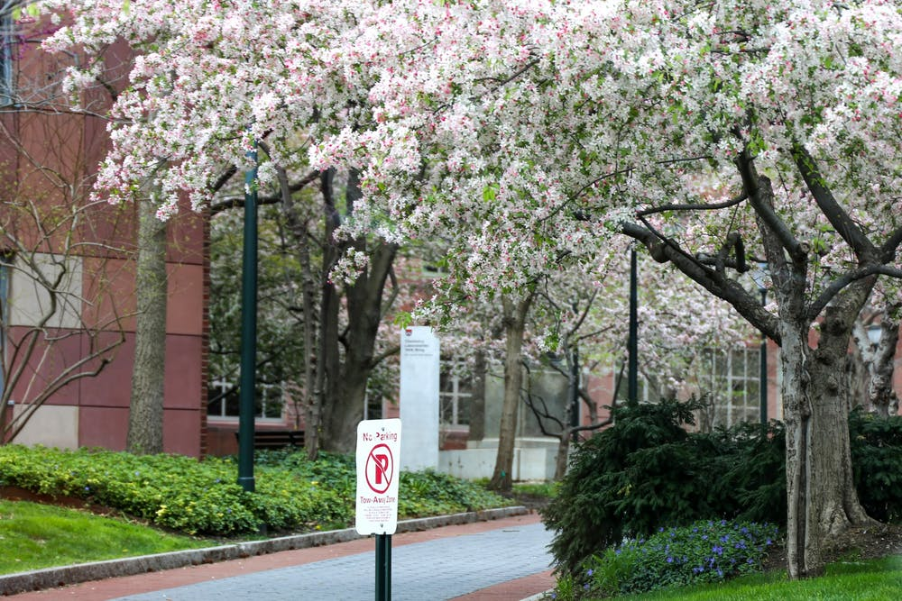 cherry-blossoms-penn-campus-spring-2020-coronavirus-philadelphia