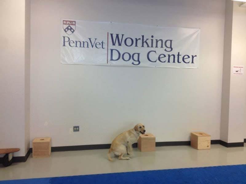 Officer Socks: first member of DPS canine unit
