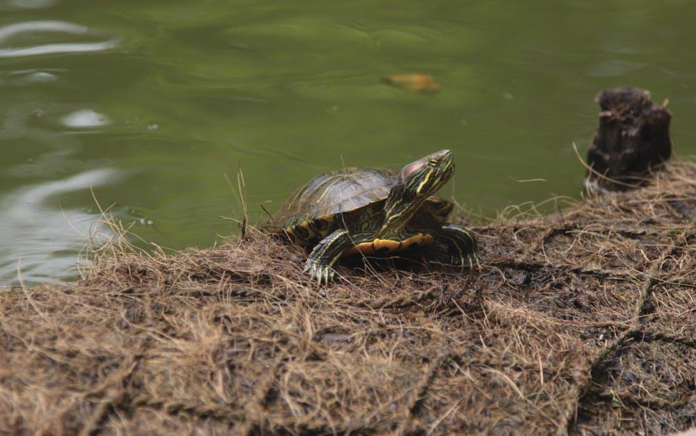 53817_turtleo