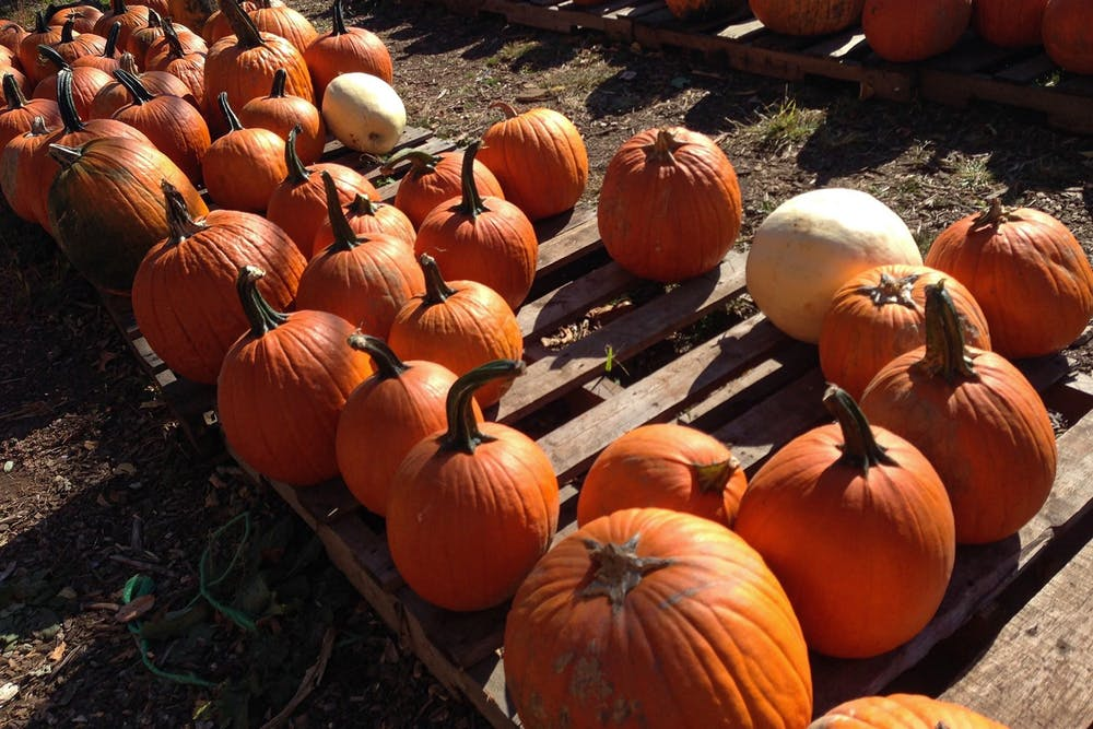 pumpkin-patch-fall-festivities