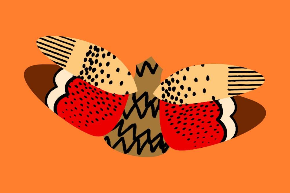 dplanternfly