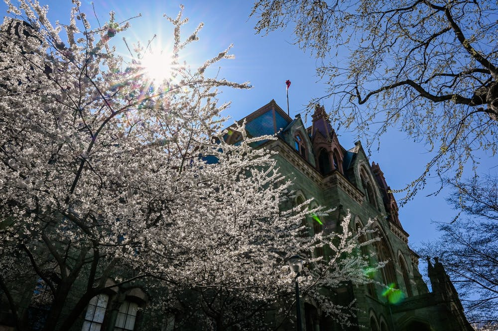 04-03-21-college-hall-spring-campus-cherry-blossoms-sun-kylie-cooper