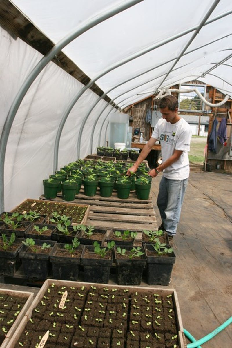 Students volunteer at Dartmouth's Organic Farm. The farm is in operation year-round but sees its peak season during the summer harvest.