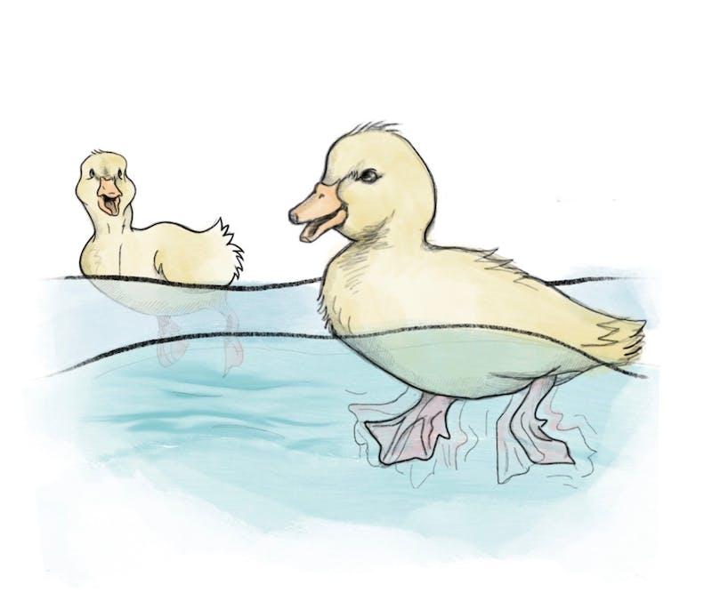 zoe_ducks