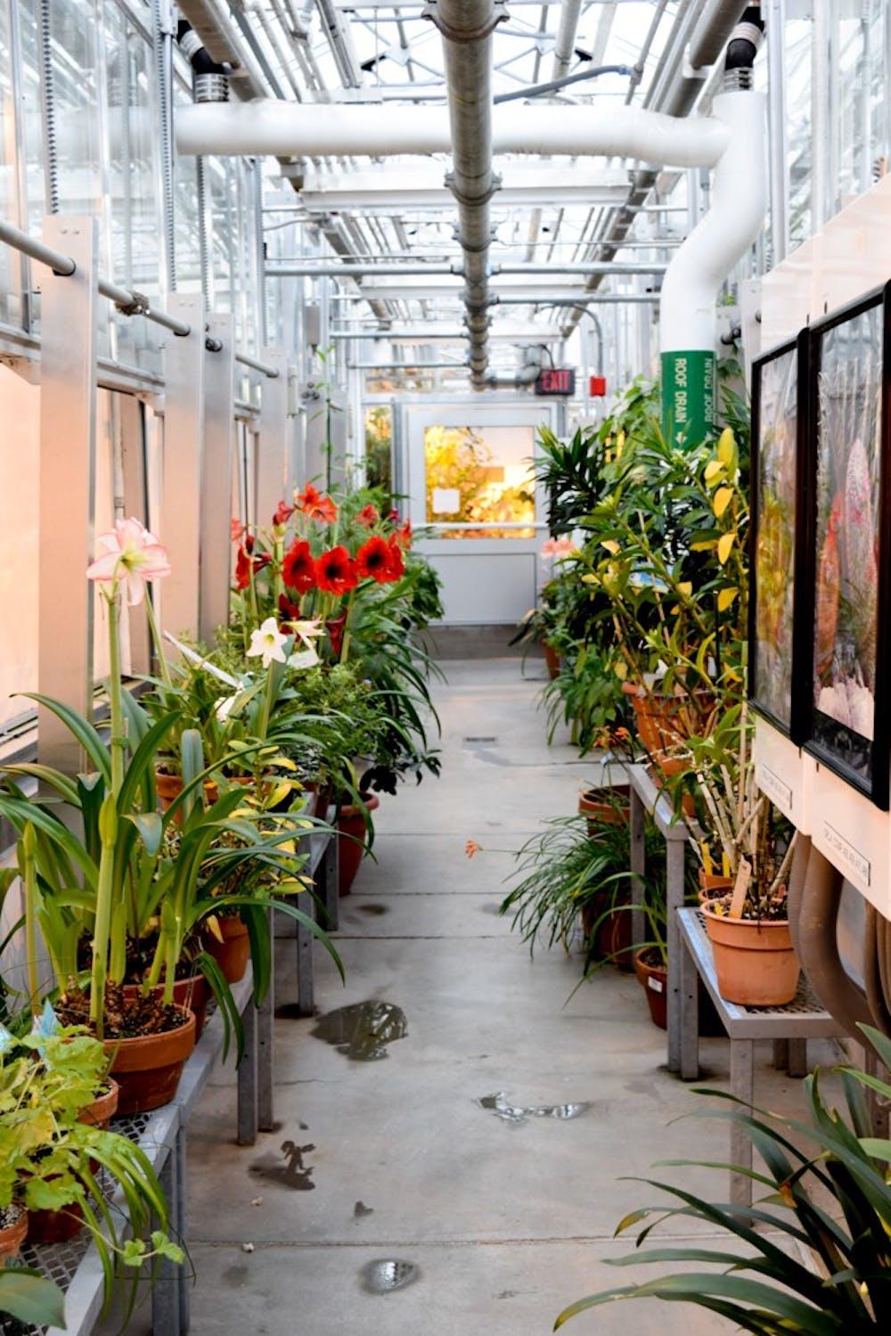 news_greenhouse_2_by_lauren_kim