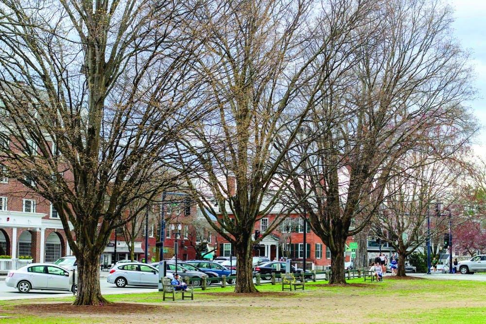4-25-trees-sydneygillman