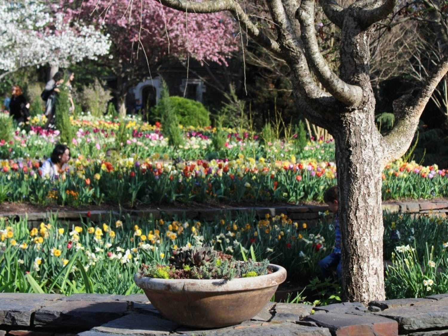 Vibrant blooms transform the Duke gardens into a world of color.