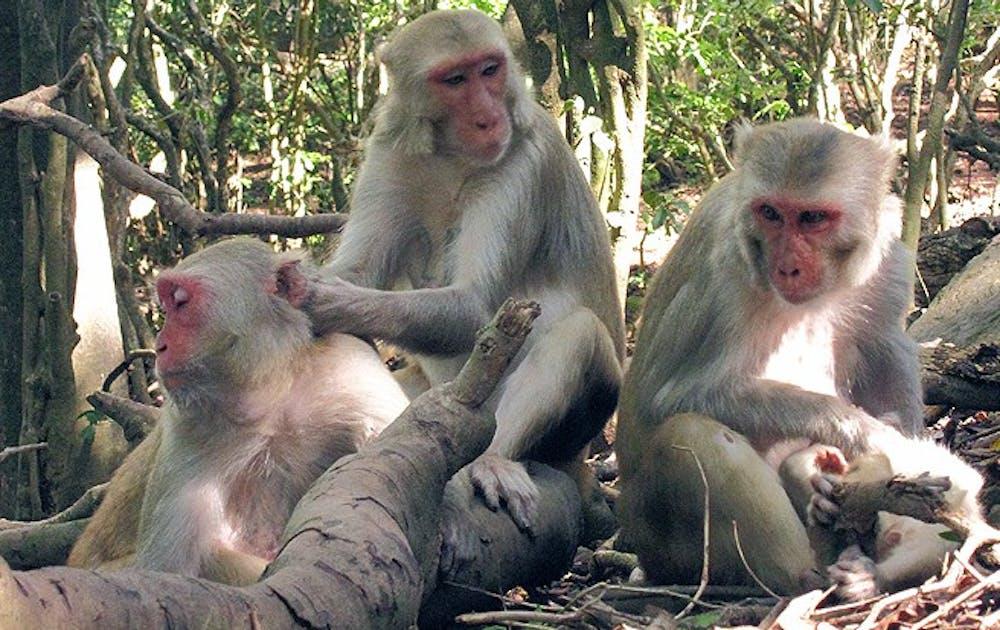 monkey_special