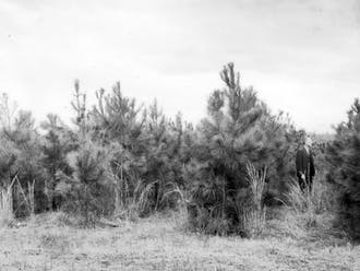 Clarence Korstian (right) is standing in the Loblolly pine plantation, which was established in March, 1931. Korstian became the first director of the Duke Forest, laying the land as a center for teaching and research.