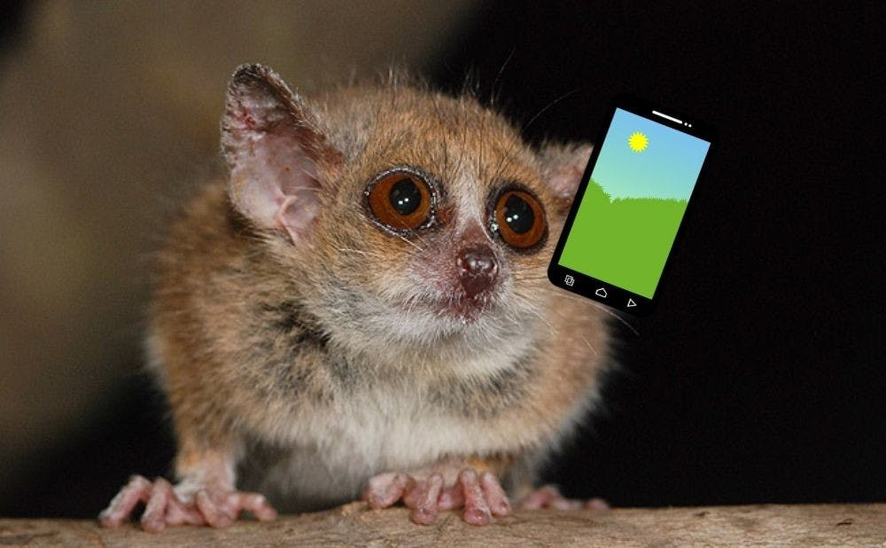 The DLC needs Android phones to test how mouse lemurs perceive color.