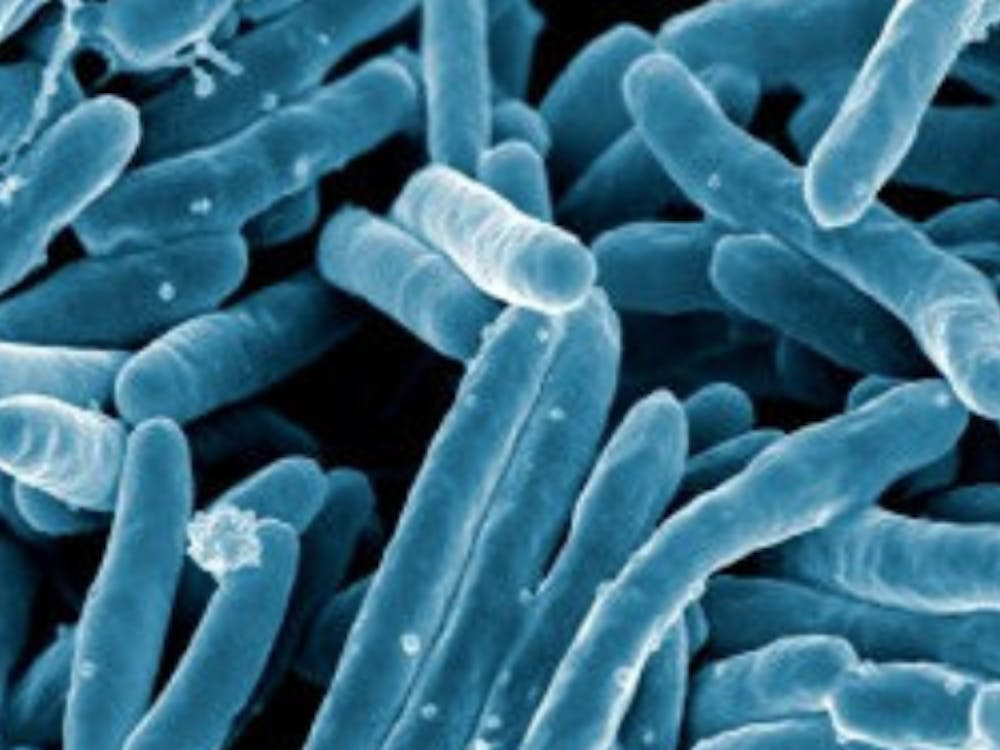 Tuberculosis bacteria under a scanning electron microscope | Courtesy of Flickr