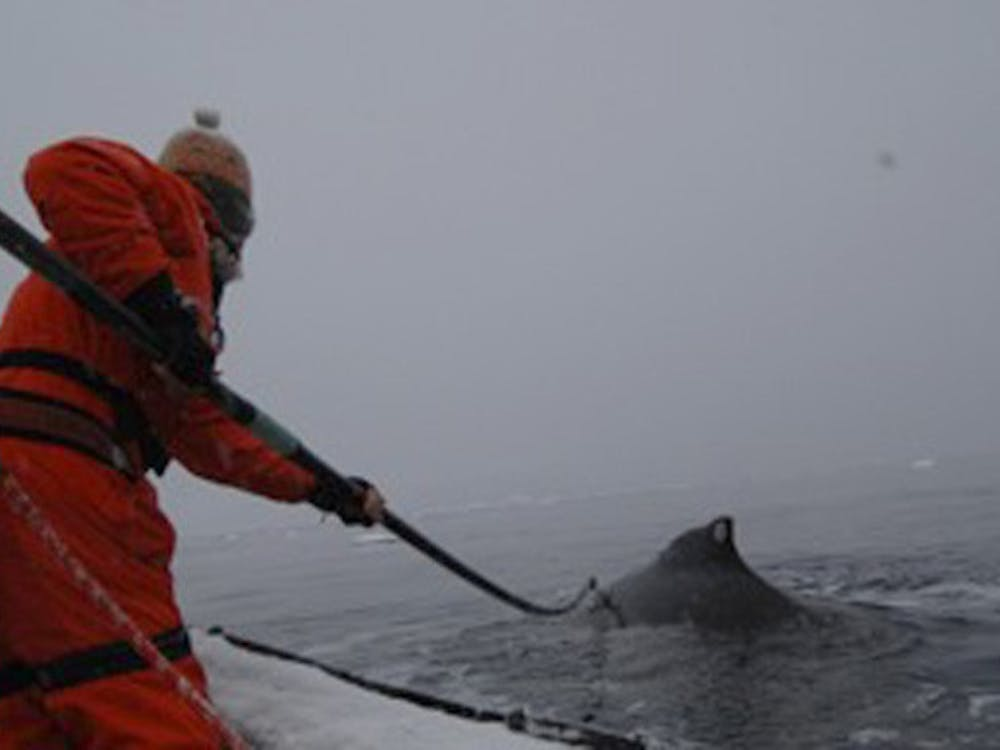 Duke Marine Lab researchers Doug Nowacek and Ari Friedlaender led an expedition to Antarctica to study humpback whale behavior this past summer.