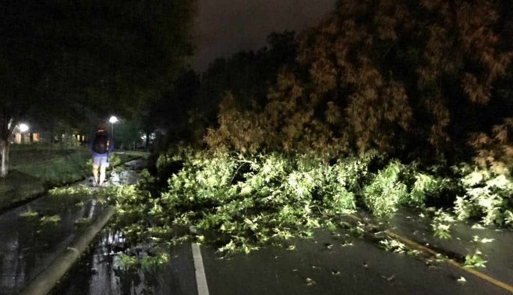 A fallen tree blocked Campus Drive Friday night.