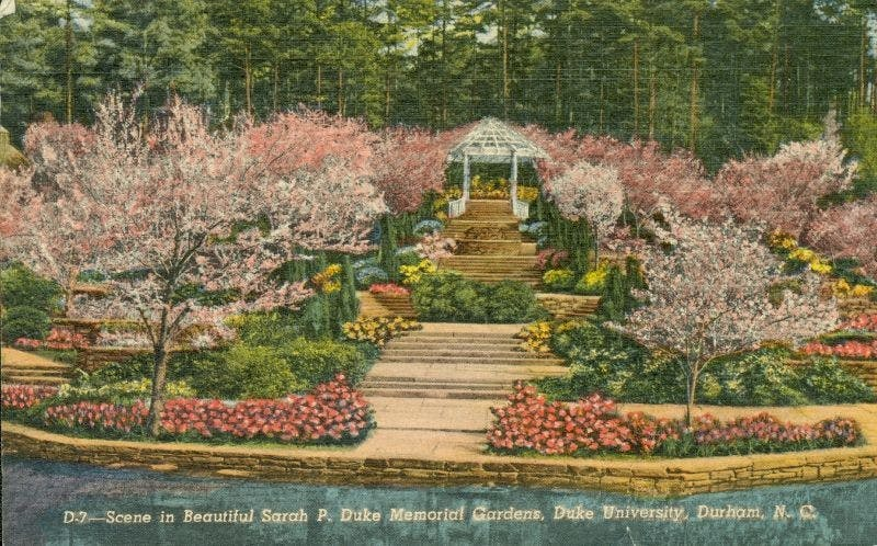 A 1952 illustrated postcard | Courtesy of the Duke University Archives