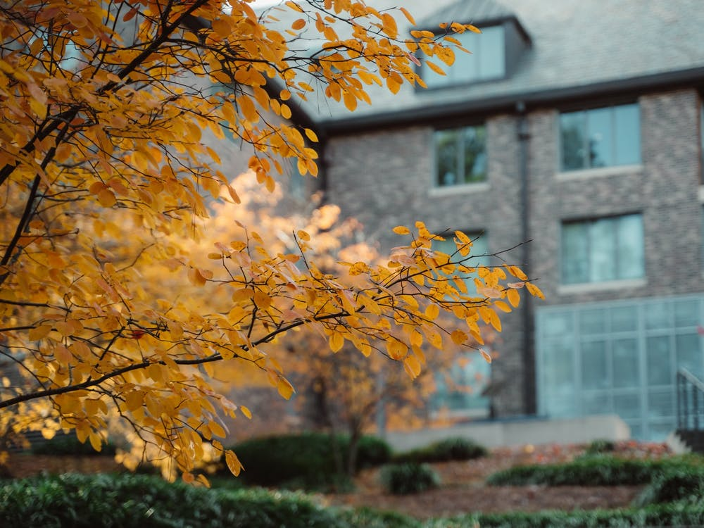 Autumn is coming to a close as winter slowly creeps up on our gothic wonderland. Check out some of Features Photo Editor, Aaron Zhao's photos of the colorful leaves before they fall away.