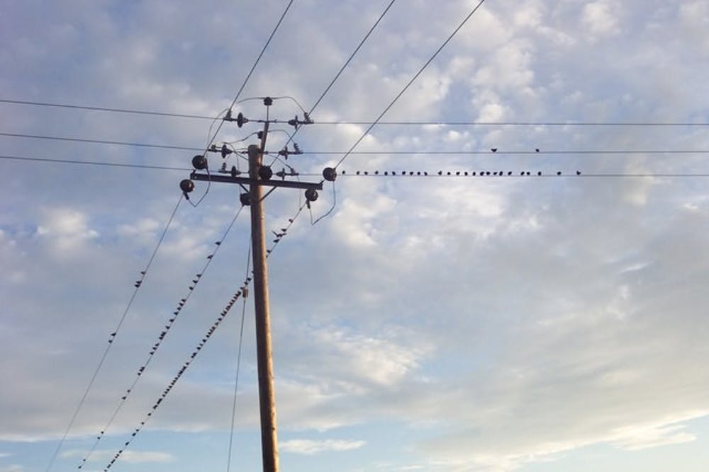 birds-on-the-wire-geograph-org-uk-313752