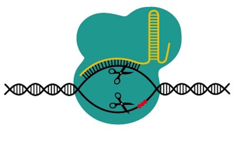 201412_CRISPRCAS9blue.jpg