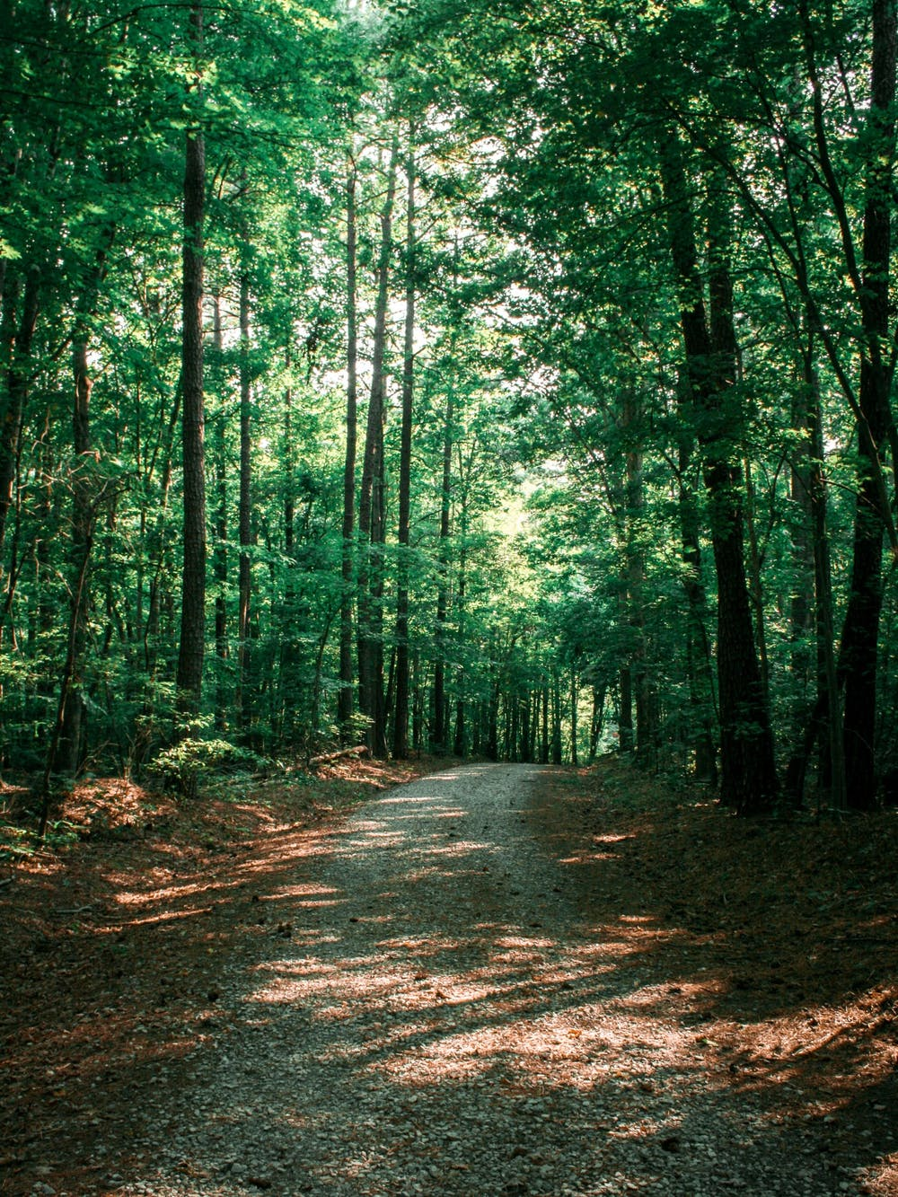 University Adds 27 Acres To Duke Forest To Stop Development