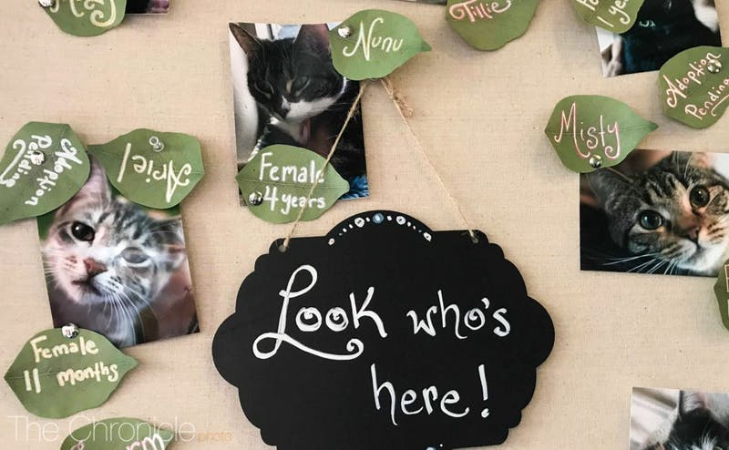 A new cat cafe in Chapel Hill offers visitors the chance to meet new feline friends—and adopt them.