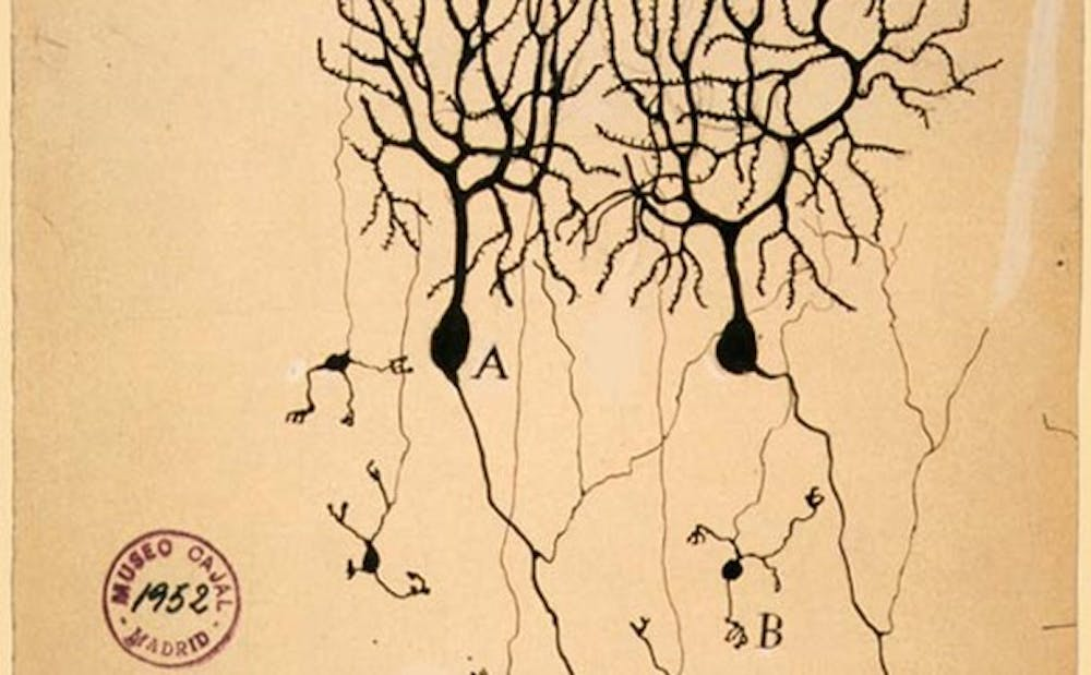 <p>An 1899 illustration of the perception of neurons at the time.</p>
