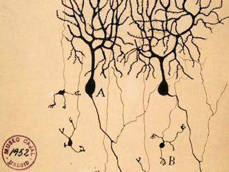 An 1899 illustration of the perception of neurons at the time.