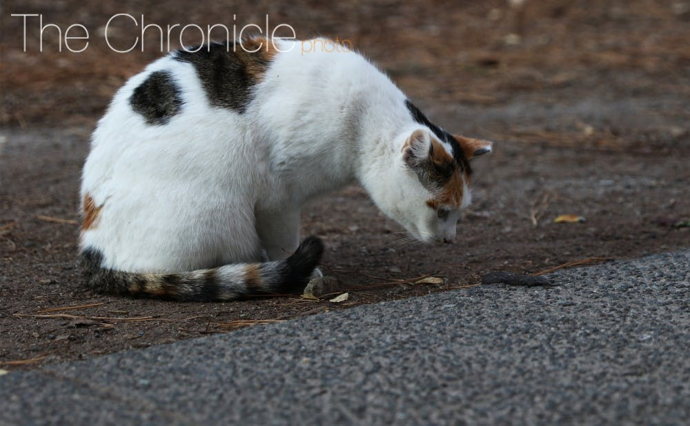 <p>Students noted that the cats on campus are friendly and enjoy being petted.&nbsp;</p>
