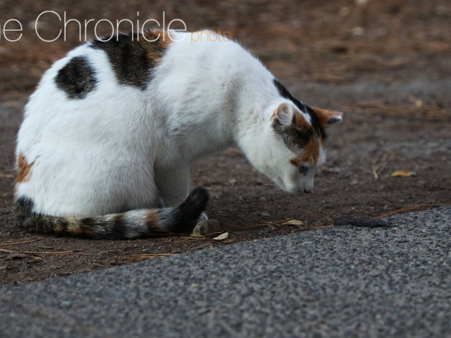Students noted that the cats on campus are friendly and enjoy being petted.