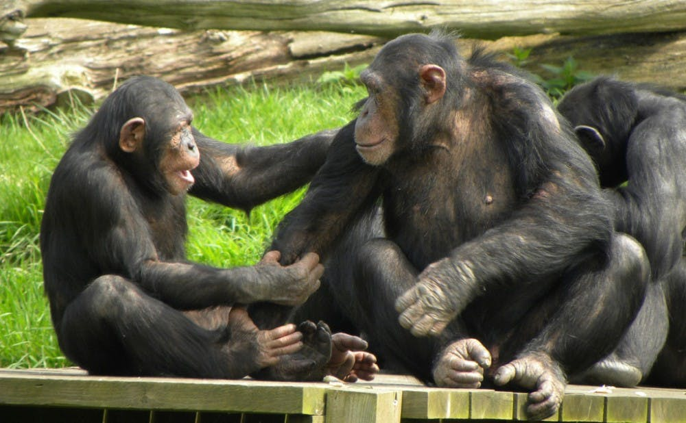 <p>The study showed that apes'&nbsp;understanding of others as mental beings is more complex than scientists previously thought.&nbsp;</p>