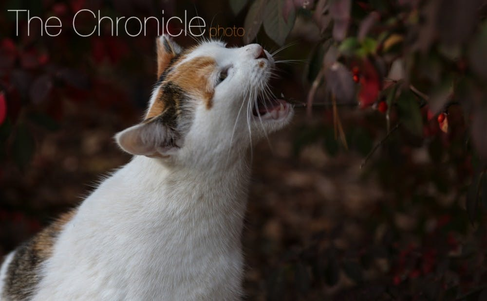 26437_cat_carolynchang2f