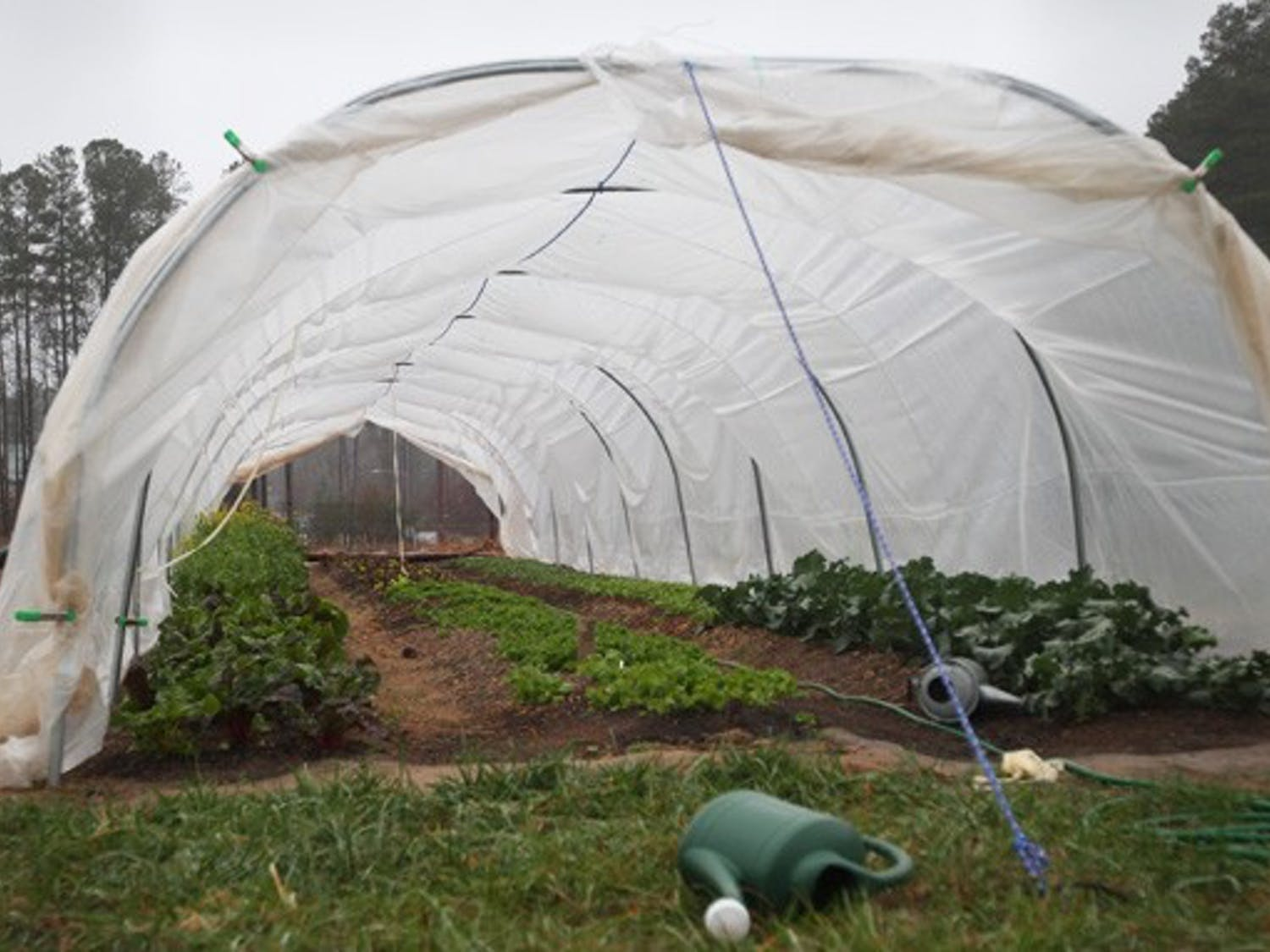 The Duke Campus Farm, which just celebrated its first full year of operation, has generated approximately 5,000 pounds of produce.