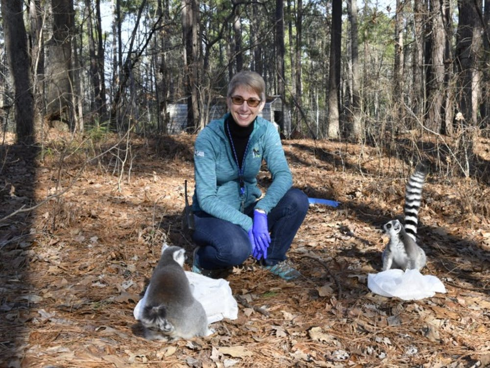 Meg Dye, curator of behavioral management, trains ring-tailed lemurs in the Duke Lemur Center's natural habitat enclosure through positive reinforcement.