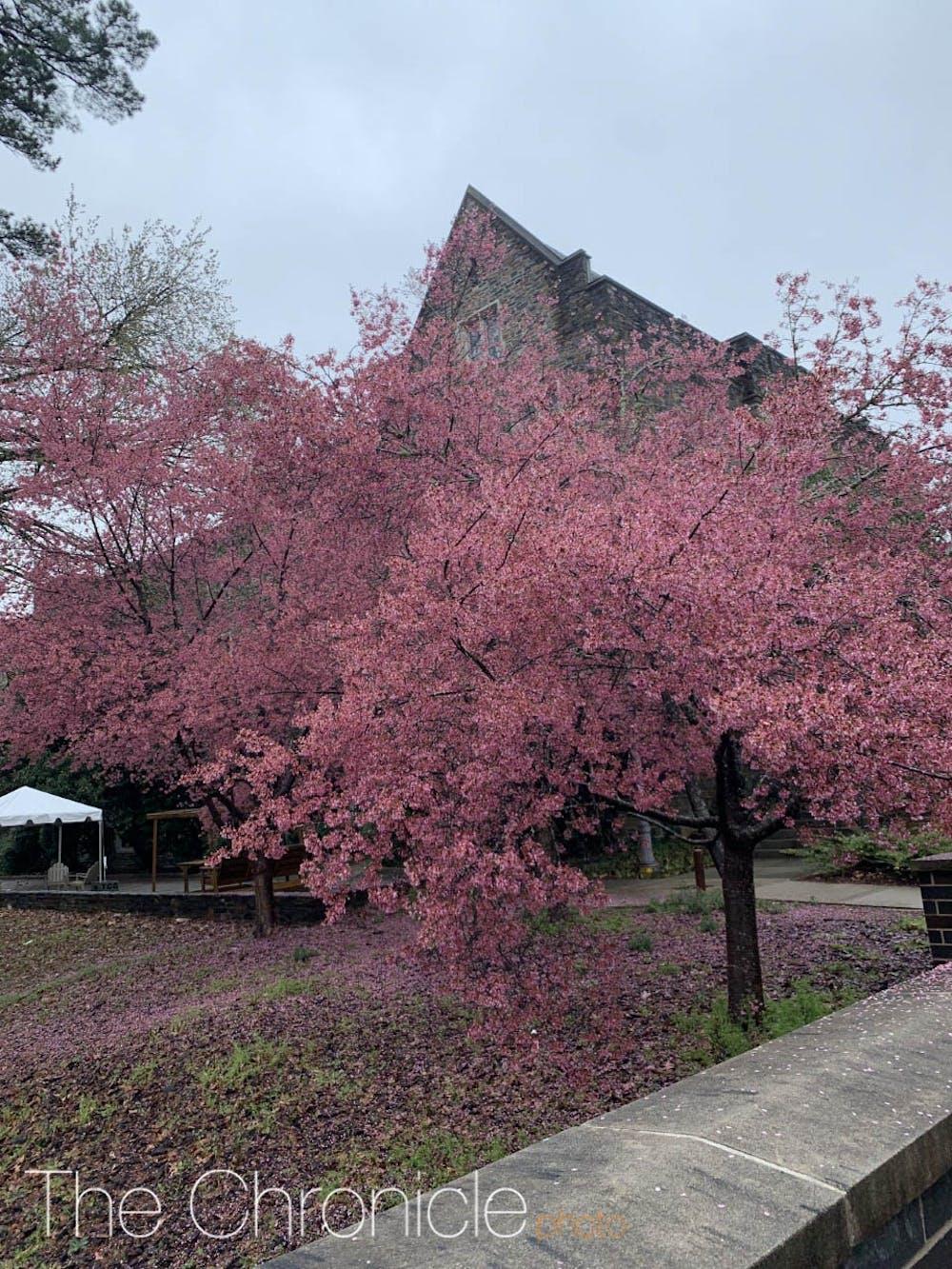 treesinbloom-.jpg