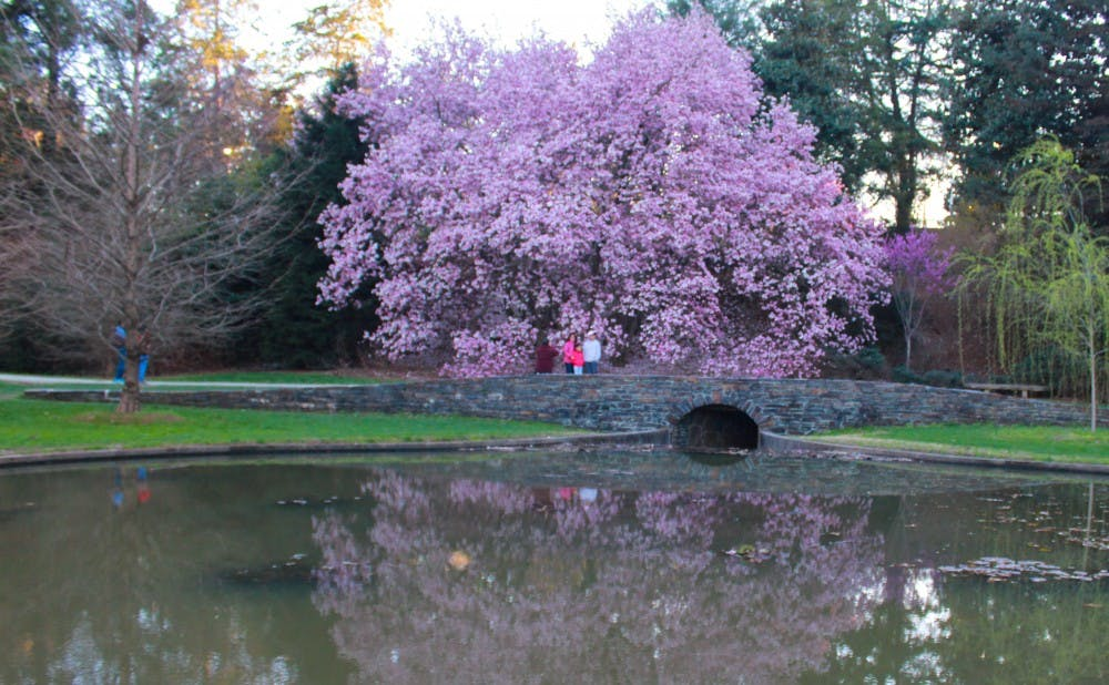 <p>A pond captures the reflection of this stunning magnolia tree.</p>