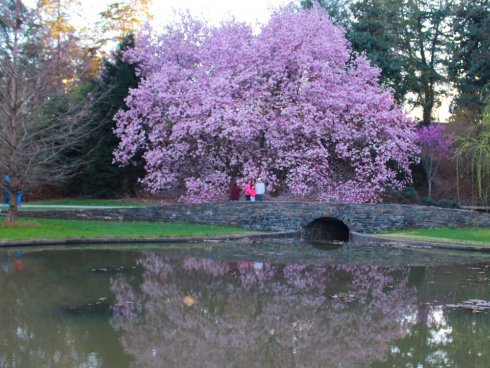 A pond captures the reflection of this stunning magnolia tree.