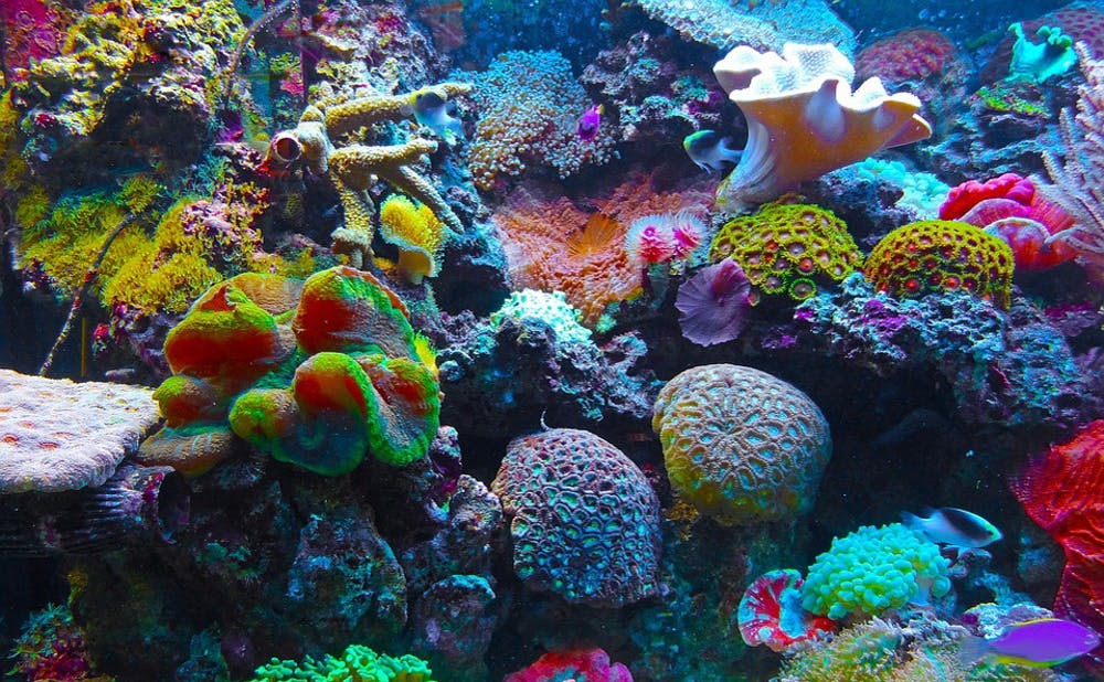 <p>The study  used ocean acidification and temperature data to predict the areas that would be impacted the most by coral loss.</p>