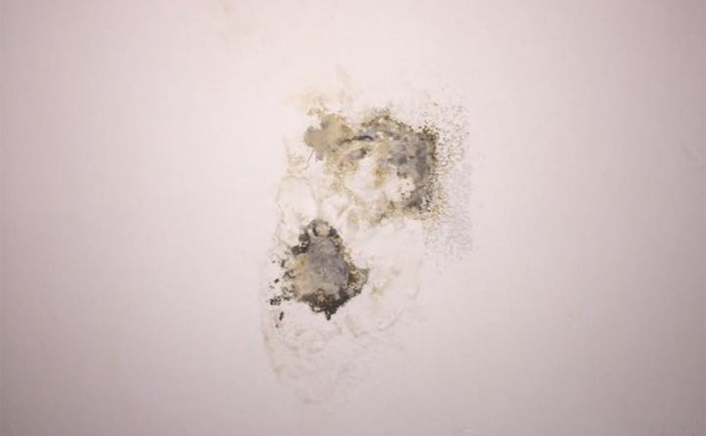 <p>Sophomore Ines Jordan-Zoob posted a photo on Facebook of mold in a campus&nbsp;apartment.</p>