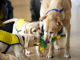 Puppies from the Canine Cognition Center are back to play (and snooze) in the Wellness Center on Tuesdays between 12:00-1:00 PM.