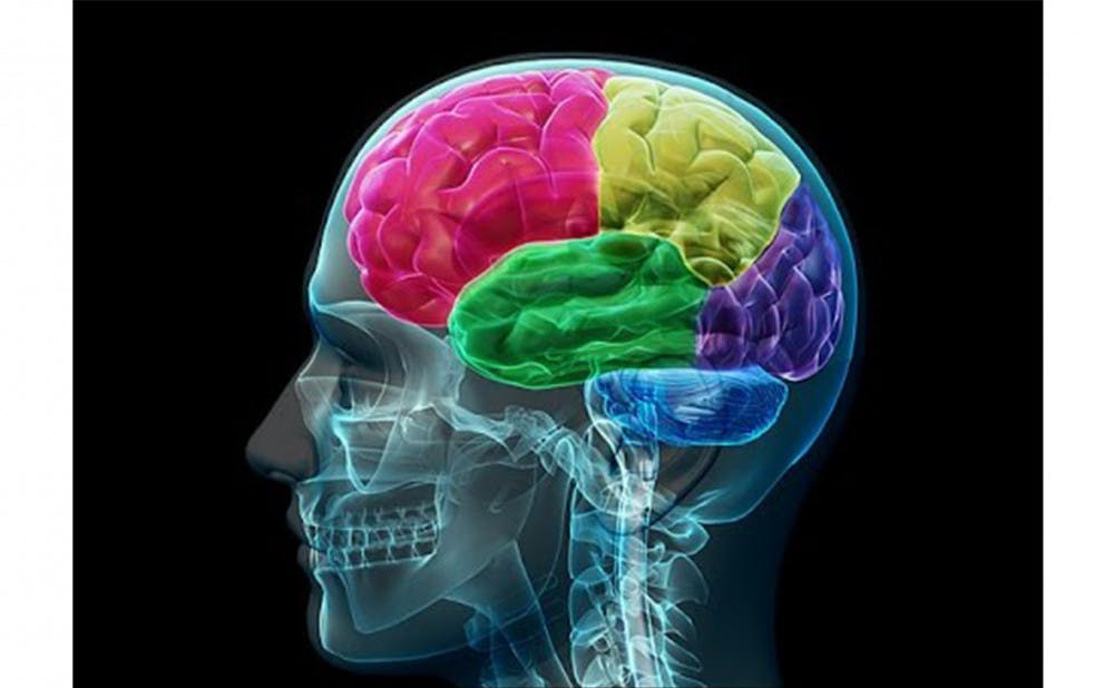 <p>A study by the Adcock Lab had participants consciously manipulate live images of brain activity.</p>