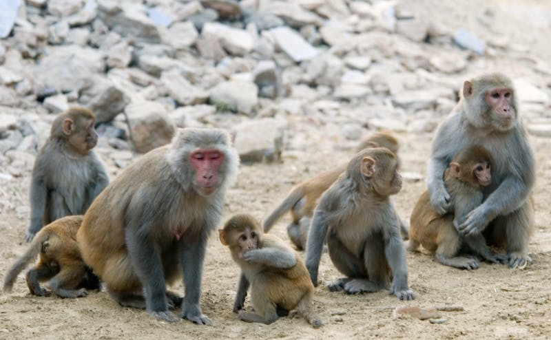 A new study finds that different genes are activated based on the social status of monkeys.