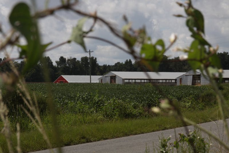Dexter Jackson Farms in Duplin County is one of nearly 2,300 hog farm operations in N.C.