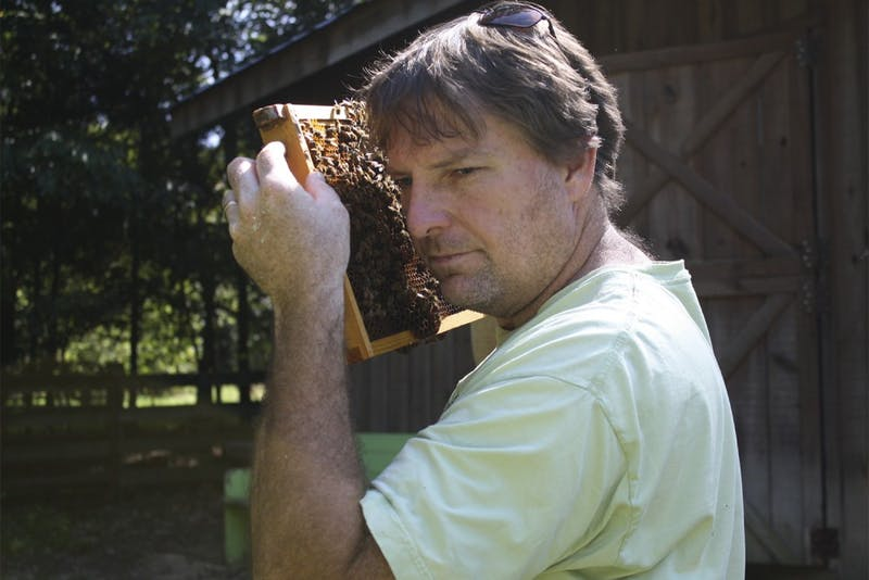 """Marty Hanks, the creator of """"Just Bee Apiary,"""" a bee farm located on his land just outside of downtown Chapel Hill, checks on his honeybees. Hanks makes it a priority to raise his thousands of bees without the use of unnatural chemicals."""