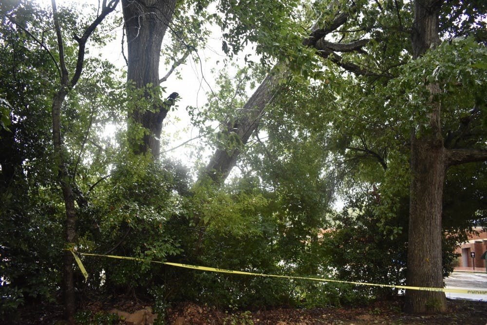 A tree has been uprooted and wedged between two others behind Parker residence Hall.