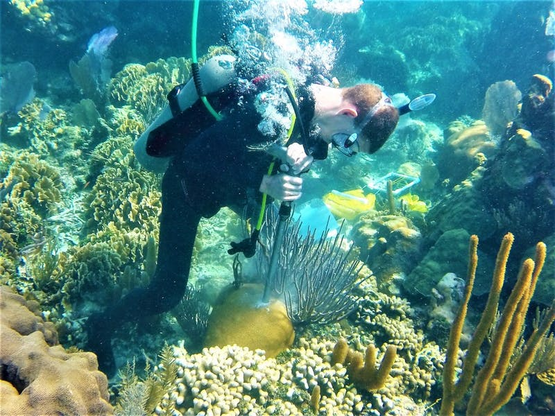 Justin Baumann drills a coral core in Belize. Photo by Hannah Aichelman.